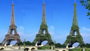 Vue de la Tour Eiffel recouverte de la peau de Ginger, au fil de la croissance des plantes